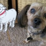 Lita's dog Sheldon w/Alice